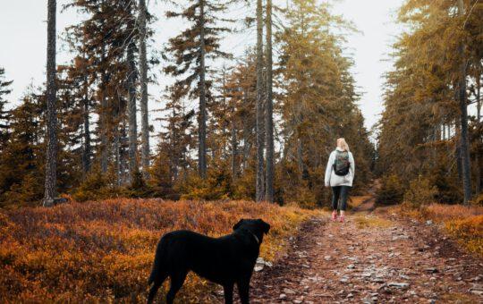 short coat black dog standing on brown ground